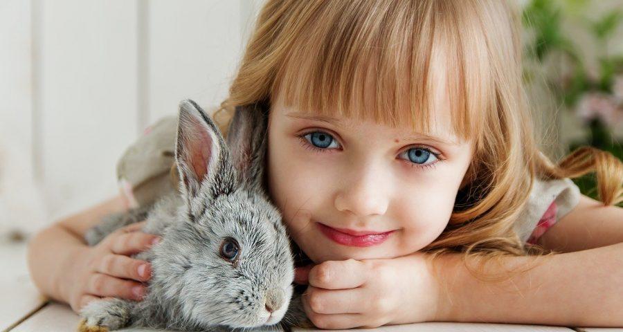 Haustiere für Kinder